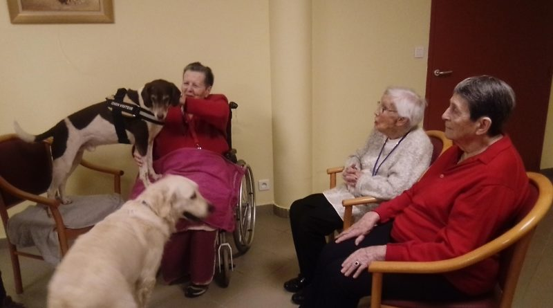 chien visiteur - médiation animale- EHPAD