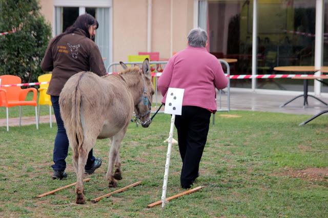 médiation par l'animal en EHPAD